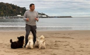 tres excepcionales cachorritos de West Highland White Terrier.