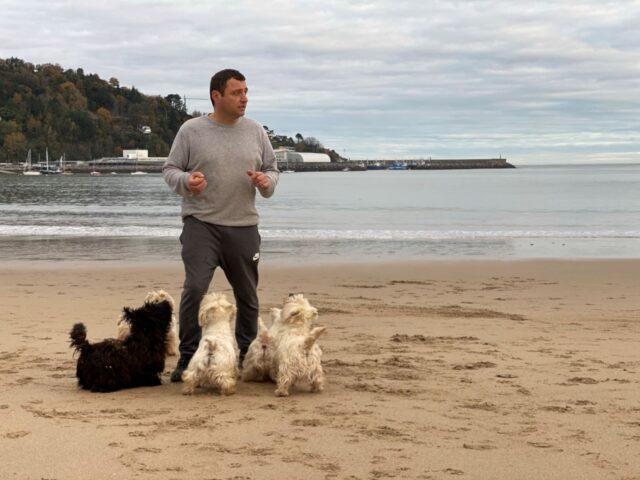 tres excepcionales cachorritos de West Highland White Terrier.