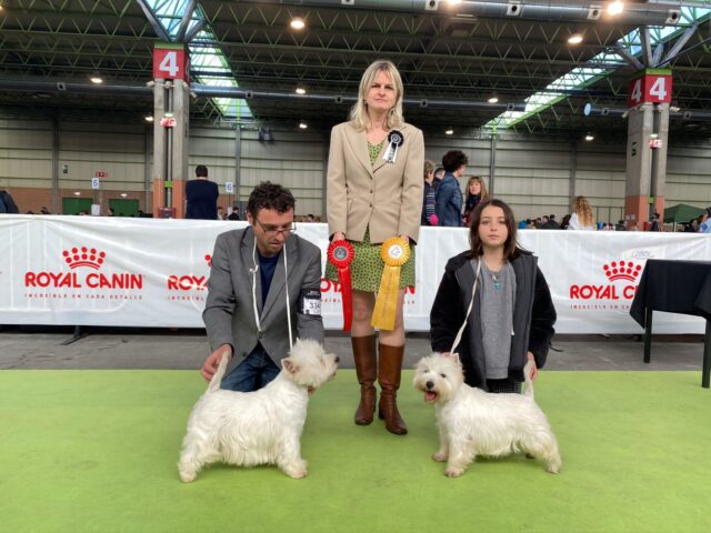bahia-de-txingudi-westie-westy-west-highland-white-terrier-5