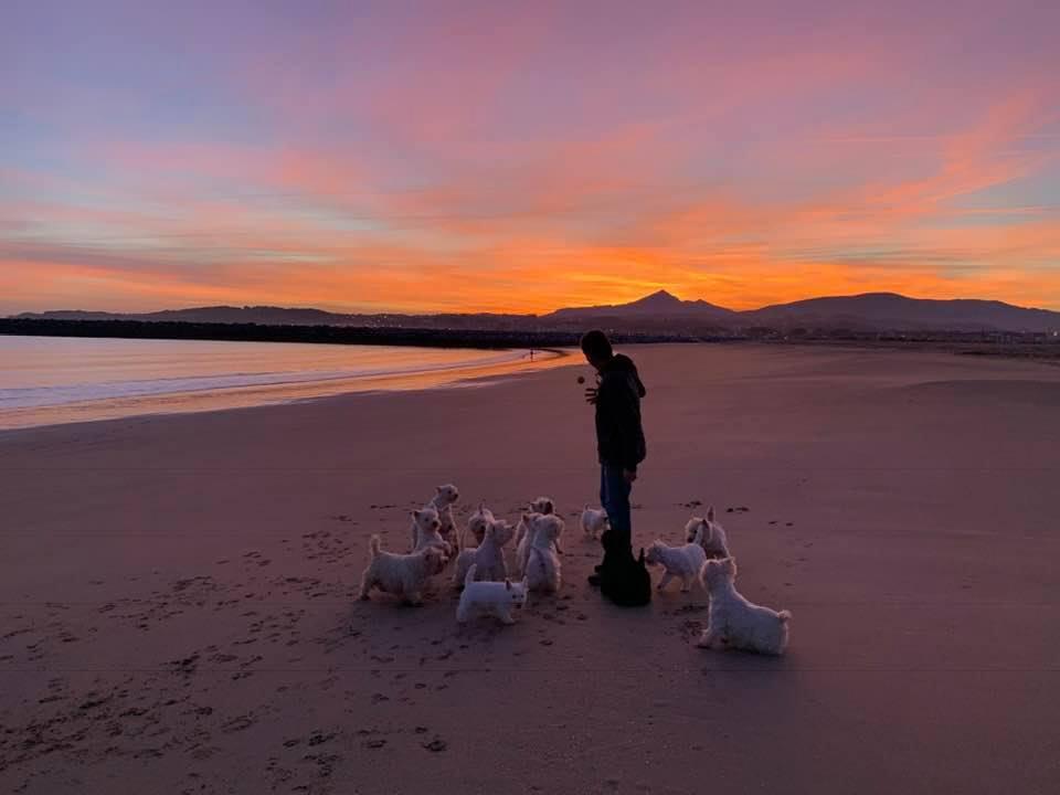Westie en la playa con puesta de sol