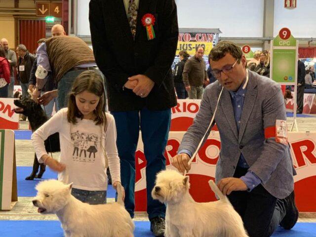 west-highland-white-terrier-bahia
