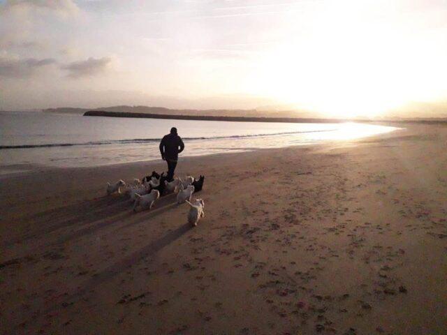west-highland-white-terrier-bahia-de-txingudi-westie